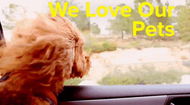 [Video] How Our Pets Influence What Home We Buy